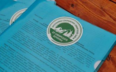 Программа сохранения сибирской тайги от СИБИРСКОГО БОЧОНКА стартовала 4 июля 2015 г_