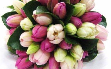 Тюльпаны-нов
